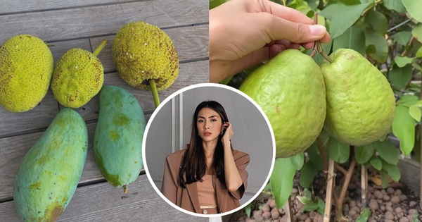 'Đột nhập' vườn cây trái trĩu cành trong biệt thự triệu đô nhà Hà Tăng, chỉ xem ảnh thôi mà ai cũng muốn… thu hoạch hộ gia chủ!