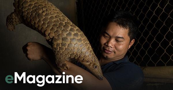 """Đi tìm công bằng cho tê tê - Câu chuyện đầy xúc động của Nhà bảo tồn đầu tiên tại Việt Nam dành giải thưởng danh giá 'Nobel xanh"""""""