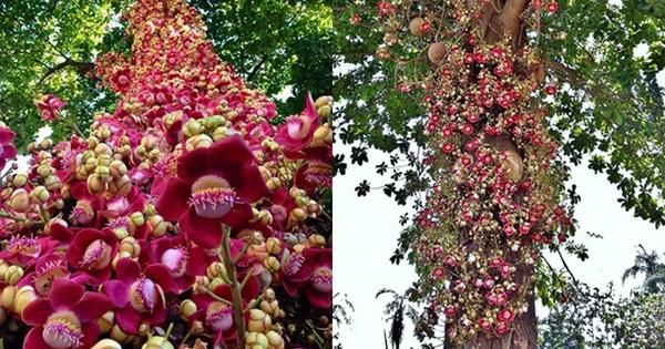 Loài hoa mọc chen chúc tua tủa từ gốc đến ngọn: Sở hữu vẻ đẹp xao xuyến, ẩn chứa ý nghĩa đặc biệt và được người Việt quý vô cùng