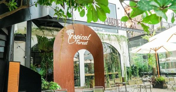 Tropical Forest x Fordeer - Những khu rừng nhiệt đới giữa lòng Hà Nội