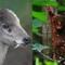 15 loài dị thú có ngoại hình kỳ lạ và hiếm có, đảm bảo nhiều người thấy chúng lần đầu