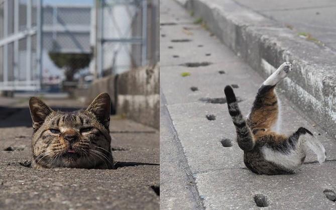 Bị chủ bạc đãi, anh em mèo hoang Nhật kéo nhau xuống cống sống đời an yên