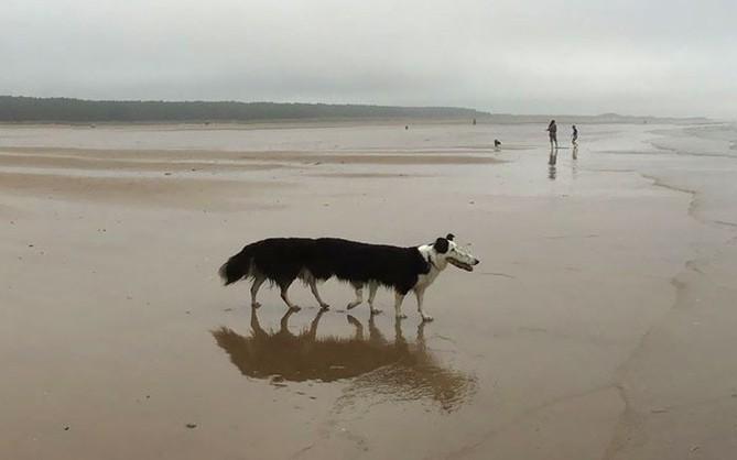 Panorama để chụp cảnh thì hay nhưng hễ chụp chó lại ra sâu róm nhiều chân