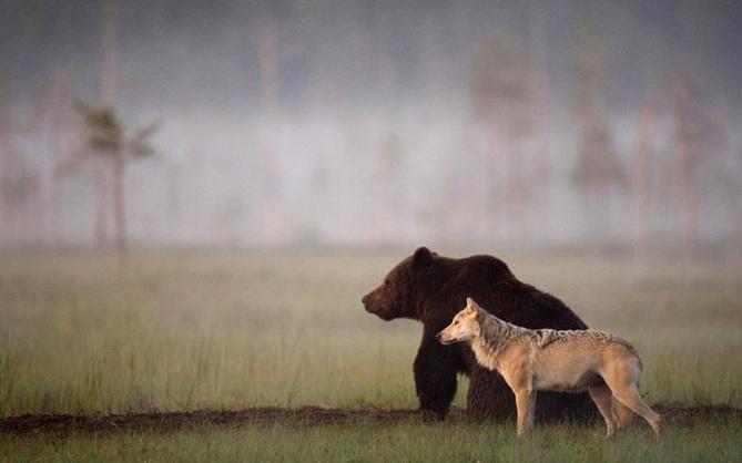 Chuyện tình vụng trộm của nàng sói xám và chàng gấu nâu: Quấn quýt từ 8 giờ tối tới 4 giờ sáng mỗi ngày rồi ai về nhà nấy
