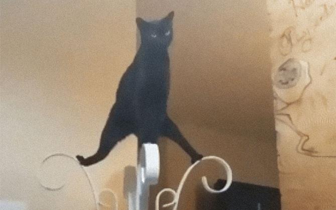 """Khi lũ mèo lên cơn """"ngáo"""" khiến mọi người hết hồn vì tưởng chúng đã thành tinh"""