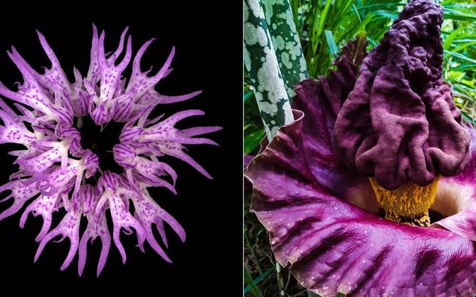 15 loài hoa sở hữu ngoại hình kỳ lạ như được hái ra từ phim viễn tưởng