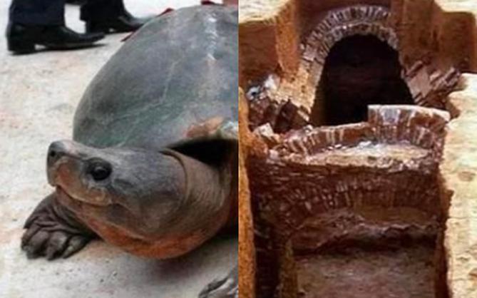 """Chuyện lạ giới khảo cổ: Khai quật ngôi mộ đóng kín suốt 2000 năm, một """"cụ"""" rùa lớn bò ra làm chuyên gia ngỡ ngàng"""