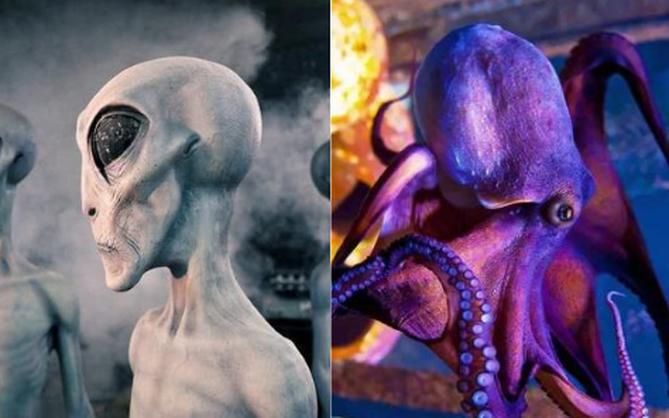 Vì sao bạch tuộc bị nghi ngờ là sinh vật ngoài hành tinh?