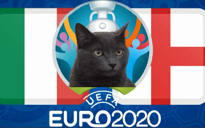 Mèo tiên tri nổi tiếng dự đoán Anh sẽ vô địch Euro 2020, tuyển Tam sư tự tin bước vào chung kết