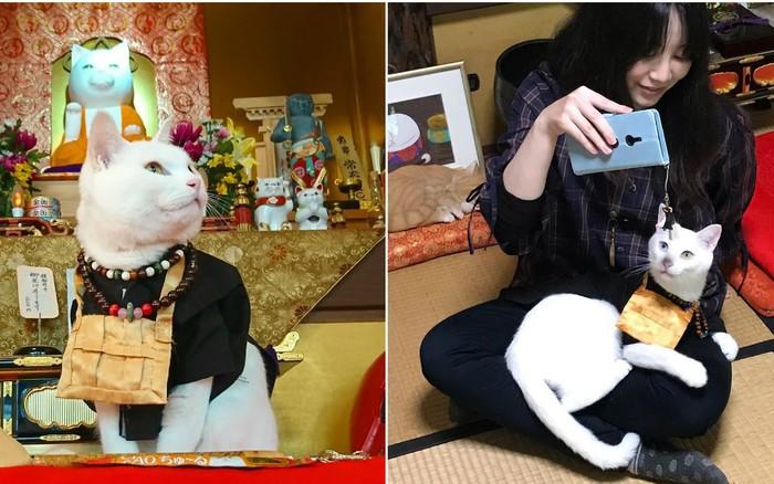 """Muốn biết mèo Nhật Bản """"quyền lực"""" ra sao, cứ đến ngôi đền """"Meo Meo Tự"""" nơi có trụ ..."""