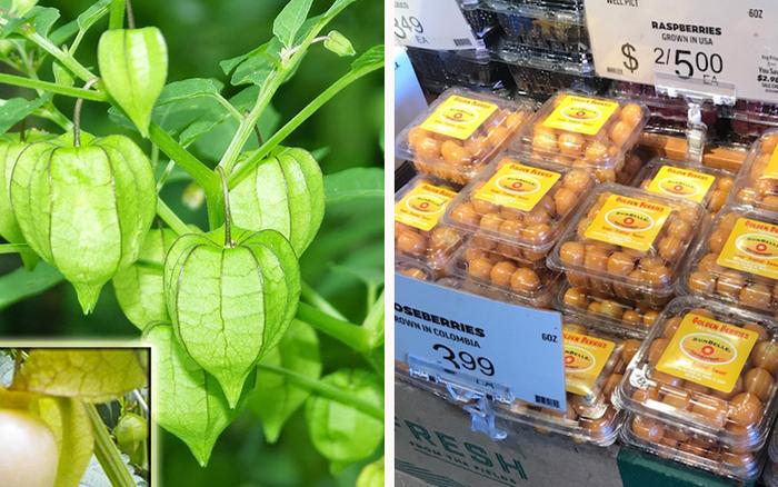 """Một loại quả mọc dại ở Việt Nam nhưng lại được bày bán """"sang chảnh"""" ở siêu thị nước ..."""