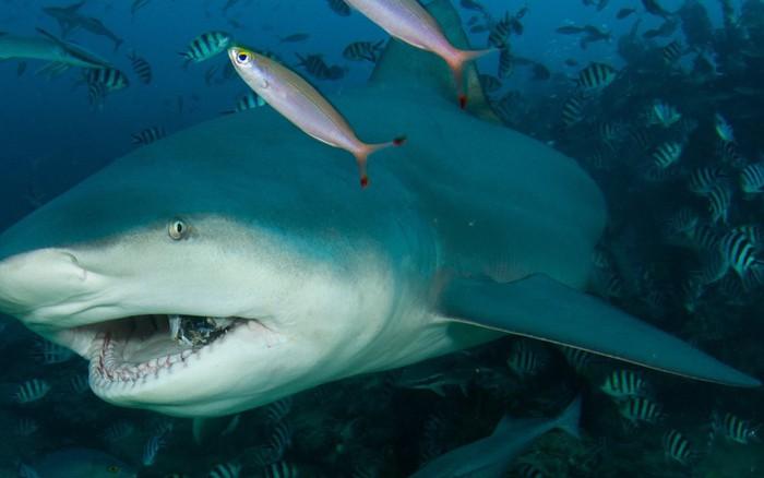 Ngày càng có nhiều người bị cá mập tấn công hơn và đây là lý ...