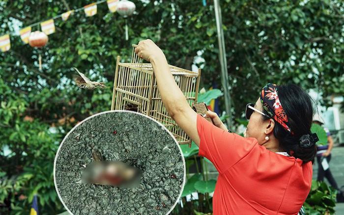 Chim phóng sinh ngày lễ Vu Lan ở Sài Gòn: Con bay không nổi, con kiệt sức ngay ...