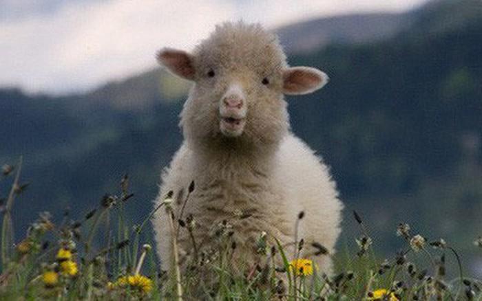 """Chúng ta đang bị Facebook, Google biến thành những chú """"cừu non"""" như thế ..."""
