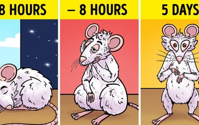 """Tác hại kinh khủng của việc thiếu ngủ: Não bộ của bạn có thể tự """"ăn"""" chính ..."""