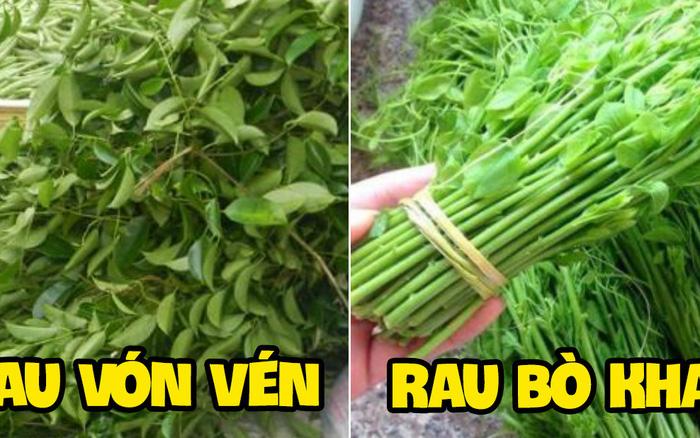 Việt Nam có 10 cây rau cực hiếm người biết mọc dại khắp các vùng quê, nhiều loại thơm ngon đến nỗi được săn tìm với giá siêu đắt