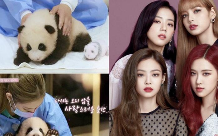 Động thái đầu tiên của YG giữa làn sóng chỉ trích gay gắt của Cnet về scandal BLACKPINK ôm gấu trúc