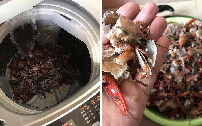 Rửa tôm bằng máy giặt theo clip mẹo vặt trên mạng, hai vợ chồng ngẩn ...