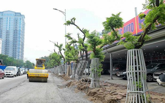 """Hàng cây sưa đỏ trên đường Nguyễn Văn Huyên được """"mặc áo ..."""