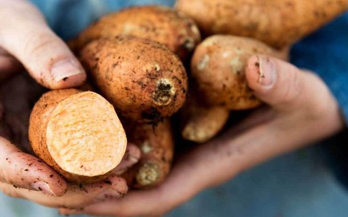 4 loại thực phẩm đừng nên ăn cùng khoai lang nếu không muốn bị đau bụng, đầy ...