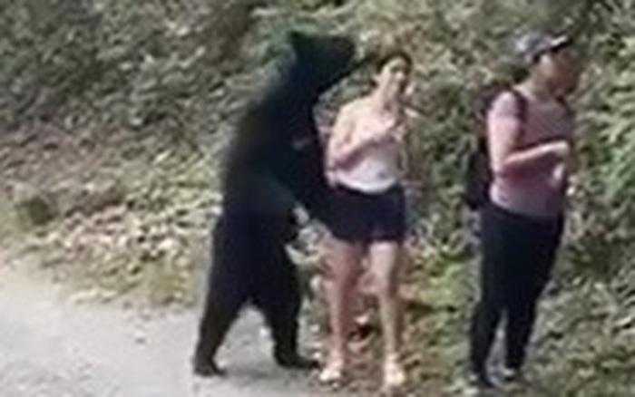 Gấu đen bị thiến sau khi vô tư
