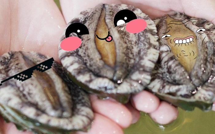 Những sự thật thú vị về bào ngư - con vật hot nhất MXH hôm nay