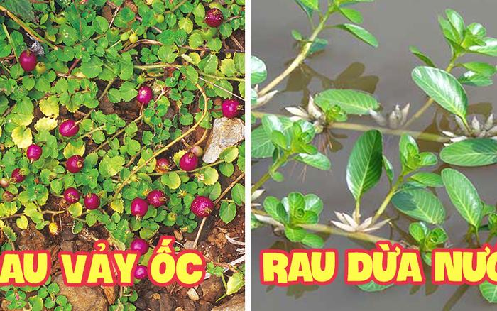 Những loại rau mọc dại khắp các vùng quê Việt Nam cực hiếm người biết, ngày nay được săn lùng vì