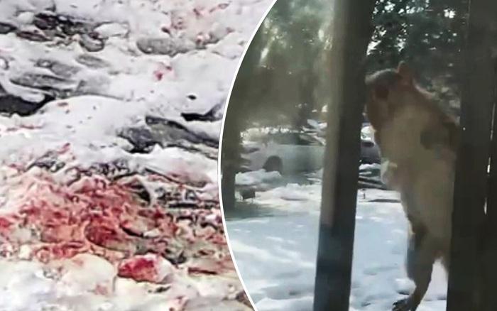 Lũ sóc điên gây ra khung cảnh máu me như trong phim kinh dị khiến dân Mỹ sợ hãi trốn tịt trong nhà
