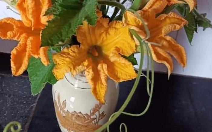 Mẹ trẻ khoe bình hoa hương đồng gió nội ai ngó qua cũng tủm tỉm, chỉ nghĩ đến lúc đem đi xào tỏi với luộc mắm gừng