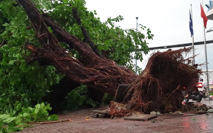 """TP.HCM: Hàng loạt cây xanh đổ ngã ra đường sau trận """"cuồng phong"""", nhiều tuyến phố ùn tắc"""
