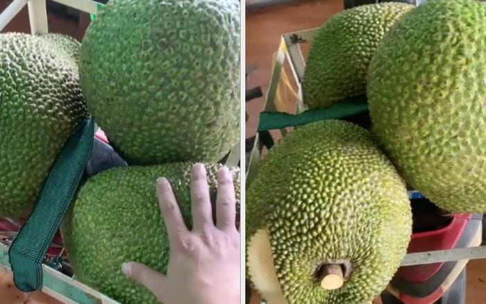 Thu hoạch được 3 trái mít nặng gần 30kg, tới lúc đem bán chàng trai