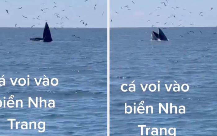 HOT: Ngư dân ghi lại cảnh cá voi