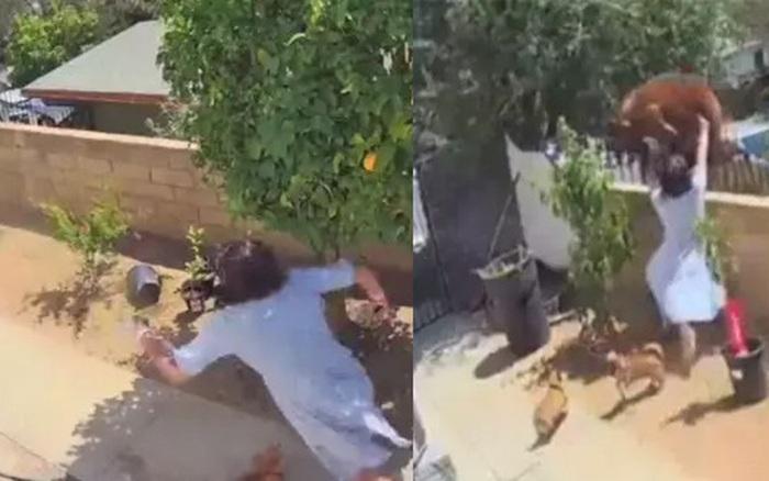 Clip người phụ nữ tay không đốn ngã gấu để cứu chó cưng đạt 28 triệu view chỉ trong 1 ngày