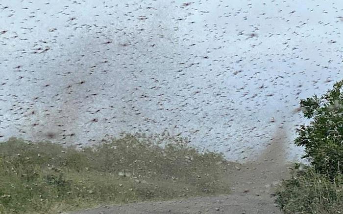 Clip gây ngứa: Cơn lốc xoáy tạo thành từ hàng tỷ con muỗi làm bà con sợ không dám ra khỏi nhà