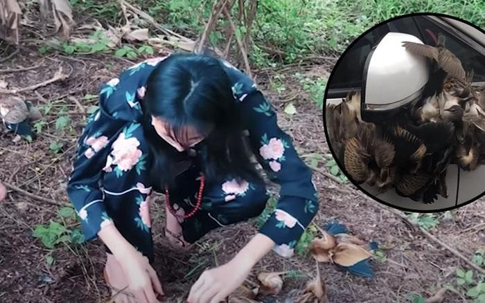 Lùm xùm khắc tên lên mai rùa chưa lắng, Thuỷ Tiên bị netizen khui lại clip treo ngược đàn cò lửa trên ô tô khi mua để phóng sinh