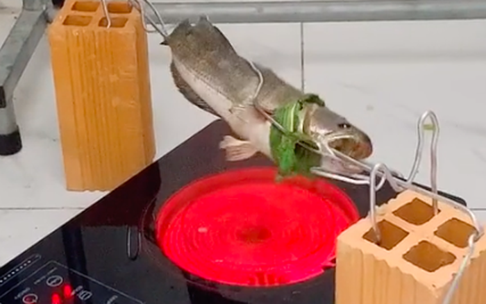 Màn nướng cá