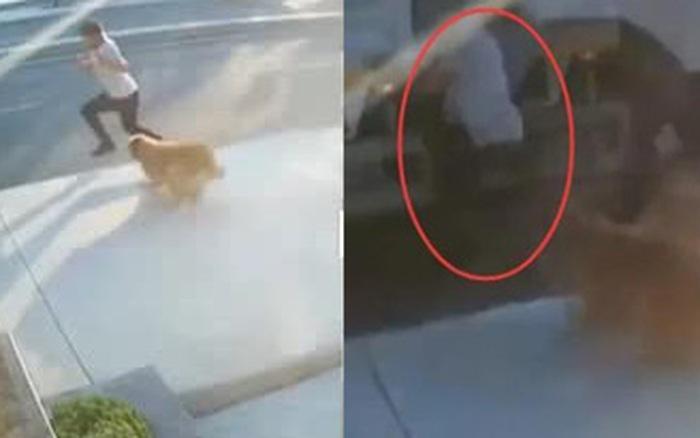 Clip: Bị chó thả rông dọa giật mình, chàng trai gặp tai nạn thảm khốc trong phút chốc