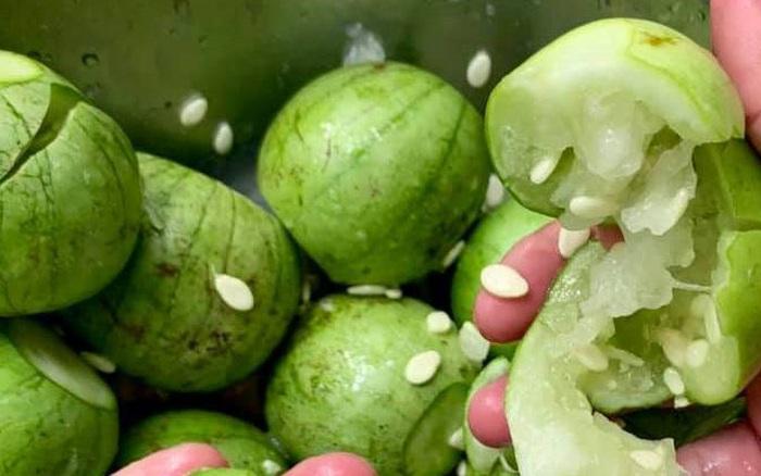 Việt Nam có 1 loại dưa nấu canh ngon bá cháy: Cứ tưởng quả gì lạ lắm, ngờ đâu ai cũng từng ăn ít nhất 1 lần trong đời